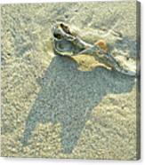 Seashell And Shadow On Sand Canvas Print