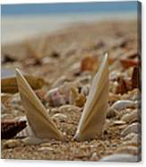 Seashell Graveyard Canvas Print