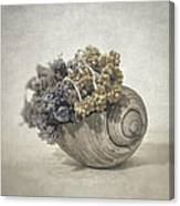 Seashell No.2 Canvas Print