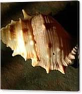 Seashell On Granite Canvas Print
