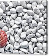 Seashell On White Pebbles Canvas Print
