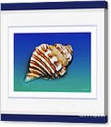 Seashell Wall Art 1 - Blue Frame Canvas Print