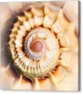 Seashell Wall Art 11 - Spiral Of Harpa Ventricosa Canvas Print