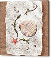 Seashell With Pearls Sea Star And Seaweed  Canvas Print