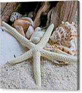 Seashells And Driftwood 2 Canvas Print