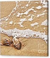 Seashells And Lace Canvas Print
