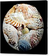 Seashells Baseball Square Canvas Print