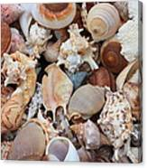 Seashells - Vertical Canvas Print