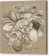 Seashells Collection Drawing Canvas Print