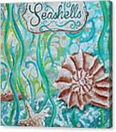 Seashells II Canvas Print