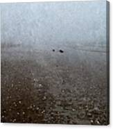 Seashells On Foggy Beach Canvas Print