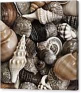 Seashells On The Beach Canvas Print