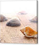 Seashells On Wood Dock Canvas Print