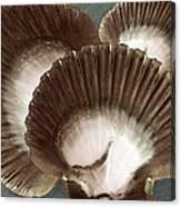 Seashells Spectacular No 22 Canvas Print