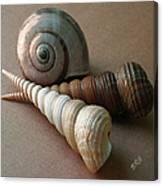 Seashells Spectacular No 29  Canvas Print