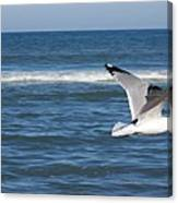 Seashore Soaring Canvas Print