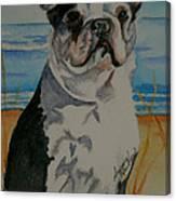 Seaside Harold Canvas Print