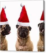 Seasons Greetings Christmas Caroling Pug Dogs Wearing Santa Claus Hats Canvas Print
