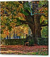 Seated Under The Fall Colors Canvas Print