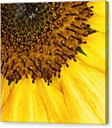 Seattle Sunflower Close-up Canvas Print