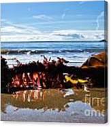Seaweed 1 Canvas Print