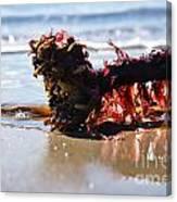 Seaweed 2 Canvas Print