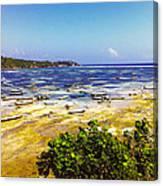 Seaweed Farming Bali Canvas Print