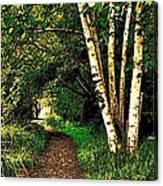 Sechelt Marsh Path Canvas Print
