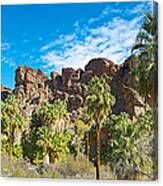 Second Largest Stand Of Fan Palms In The World In Andreas Canyon In Indian Canyons-ca Canvas Print