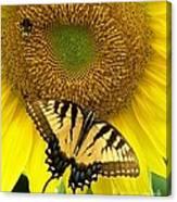 Secret Lives Of Sunflowers Canvas Print