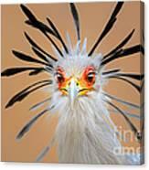 Secretary Bird Portrait Close-up Head Shot Canvas Print