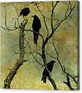 Secretive Crows Canvas Print