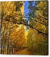Autumn Secrets Canvas Print