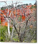 Sedona Arizona Dead Tree Canvas Print