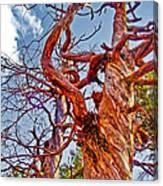 Sedona Arizona Ghost Tree Canvas Print
