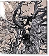 Sedona Arizona Ghost Tree In Black And White Canvas Print