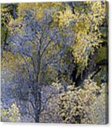 Sedona Fall Color Canvas Print