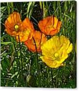 See Fou's Poppies Canvas Print