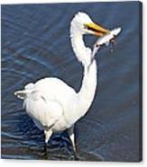 See My Catch Canvas Print