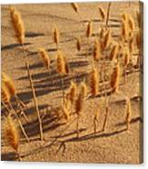 Seed And Sand Canvas Print