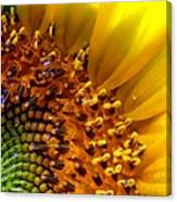 Seeds Of Sunshine Canvas Print