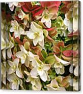 Seeing Double - Hydrangeas Canvas Print