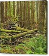 Seeing Forest Through The Trees Canvas Print