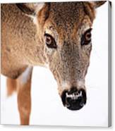 Seeing Into The Eyes Canvas Print