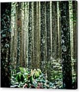 Seeing The Forest With The Trees Canvas Print