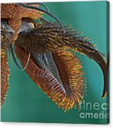 Sem Of Stable Fly Foot Canvas Print