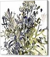 Senecio And Other Plants Canvas Print