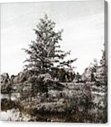 Seney Silver And Chocolate Canvas Print
