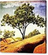 Sentinal Tree Canvas Print