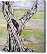 Sentinel Tree Canvas Print